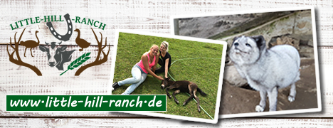 liitle hill ranch - Homepage